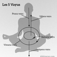 Les 5 Vayus ou les 5 vents en Yoga