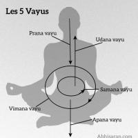 Les 5 Vayus ou les 5 vents en Yoga