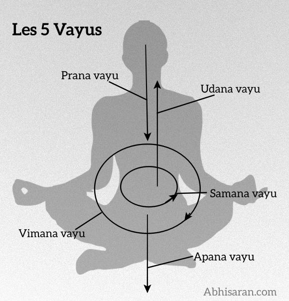 Les 5 Vayus ou les 5 vents de Yoga