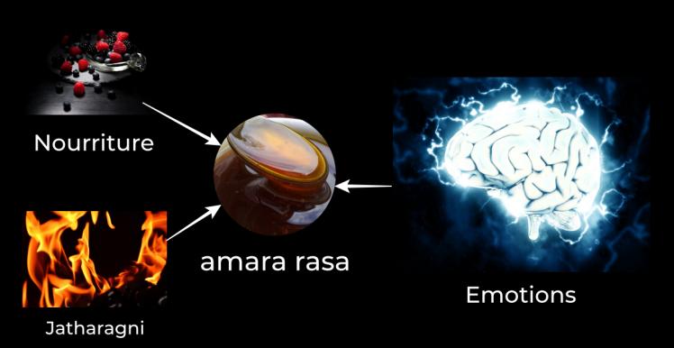Formation de amara rasa durant digestion