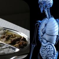 Les dhātu – l'impact de notre nutrition sur notre corps.